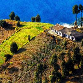 Salam Hangat Pagi dari Timur Semeru Desa diatas awan by Aldion Christiawan - Instagram & Mobile Other