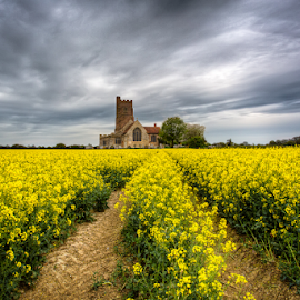 Rape field by Michael Payne - Landscapes Prairies, Meadows & Fields ( church, rape seed, landscape, rankins )