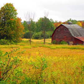 by LeeAnn Heikkila - Landscapes Prairies, Meadows & Fields ( farm, barn, fall colors, landscape photography, woods, farming )
