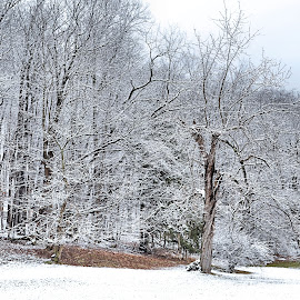 Edge of the Woods by Karen Hardman - Landscapes Weather