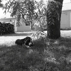 by Lisa Bergstrom - Animals - Dogs Portraits