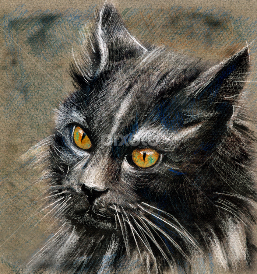 Wild Cat by Daliana Pacuraru - Drawing All Drawing ( drawings, cat, daliana pacuraru, fur, grey, eyes,  )