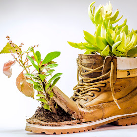 Plant Decoration by Mohamed Timo - Artistic Objects Business Objects ( shoes, product, recycle, plants, hope )