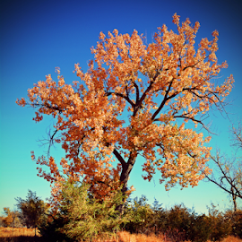 Fall colors by Jeffrey T Johnson - Landscapes Forests ( fall colors, seasons, trees, outside, country )