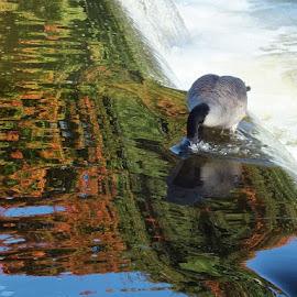 by Ivka Njegac - Nature Up Close Water (  )