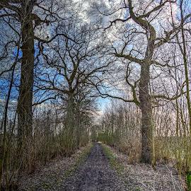 waitingforthespringtocome by Rob van der Meer - Landscapes Forests ( marienwaard, forrest, holland, spring, beesd )