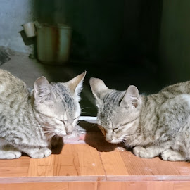 by Roopa Roop - Animals - Cats Kittens