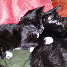 Bonnie and Elsie by Julie Pout - Animals - Cats Kittens ( cats, cat, kitten, cute, cutie )