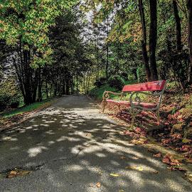 by Žana Popović - City,  Street & Park  City Parks ( , public, bench, furniture, object, fall, color, colorful, nature )
