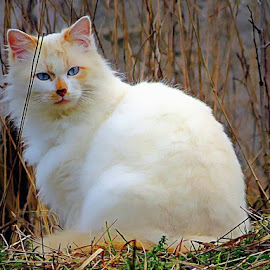 by Simona Maček - Animals - Cats Portraits