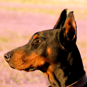 Doberman icon