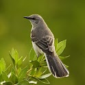 BirdLiveWallpaper icon