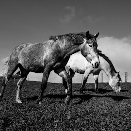 Friends by Fábio Moniz - Animals Horses