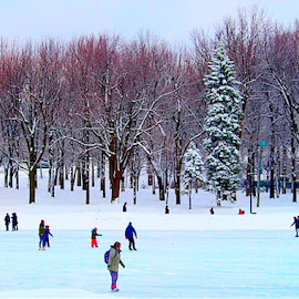 Skating on Beaver Lake by Ronnie Caplan - Sports & Fitness Snow Sports ( montreal, sky, skaters, winter, ice, snow, trees, beaver lake, branches, mount royal )