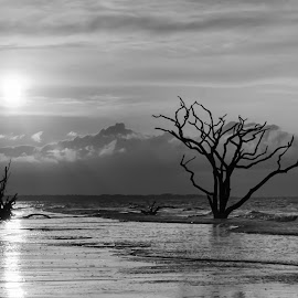 Botany Bay 3 by Harvey Lindenbaum - Landscapes Beaches ( ghost trees, botany bay, beach, surf, beachscape, black and white, b&w, landscape )