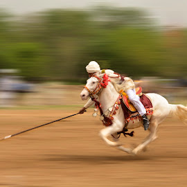 Flying Horse by Mudassar Ahmed - Sports & Fitness Rodeo/Bull Riding