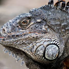 by Meca Sip - Animals Reptiles