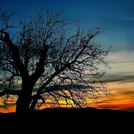 Rugaciunea de seara by Vis DeNoapte - Nature Up Close Trees & Bushes ( seara, nocturn, copac )