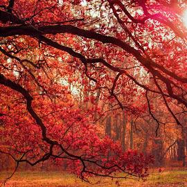 Endless Fall by David Ovidiu - City,  Street & Park  City Parks ( city parks, autumnal, autumn leaves, autumn, endless fall, autumn colours, city park )
