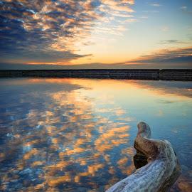 Driftwood at Sunrise by Steve McCaffrey - Landscapes Sunsets & Sunrises ( clouds, water, lake ontario, reflection, sky, toronto, cloudy, landscape photography, lake, beach, landscape )