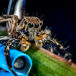 Simply Spider by Dave Lerio - Animals Insects & Spiders