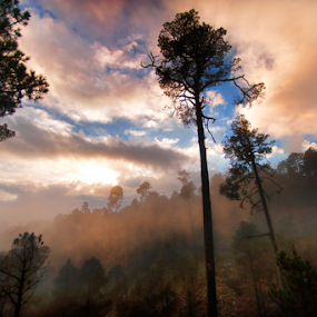 forest and fog by Cristobal Garciaferro Rubio - Landscapes Weather ( clouds, mountain, fog, weather, forest )
