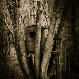 Tree home by Nic Evennett - Buildings & Architecture Other Exteriors ( tree, tree house, moody )