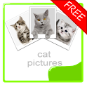 Cat Photos Album (free) icon