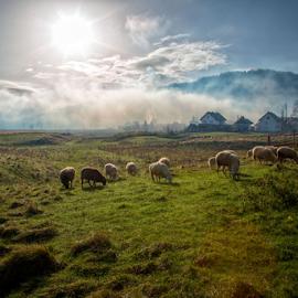 In the morning by Stanislav Horacek - Landscapes Prairies, Meadows & Fields