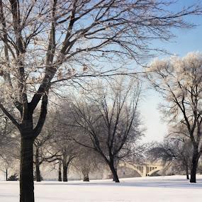 Quiet morning by the bridge by Jarrod Kudzia - Landscapes Weather ( michigan, winter, ice, snow, trees, bridge, detroit )