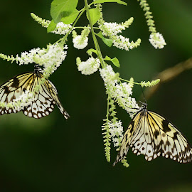tranquil butterflies by Unknown - Nature Up Close Other Natural Objects