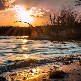 Kent Lake Sunset by Lukas Dreser - Landscapes Sunsets & Sunrises ( water, orange, park, metro, waves, silhouette, lake, beach, michigan, fresh, sunset, shadow, twig, branch,  )