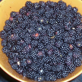 Maine Black Raspberries by Judith Beck - Food & Drink Fruits & Vegetables ( bowl, picked, plump, black, raspberries,  )