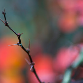 by Kathy Filipovich - Nature Up Close Other plants