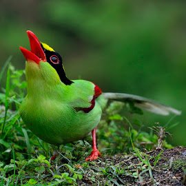 Green Magpie by Mus Tafa II - Animals Birds