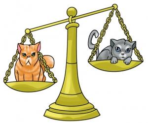 cats_pet_horoscopes_libra.jpg