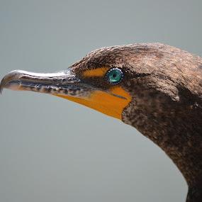 Eye To Eye by Ed Hanson - Animals Birds ( bird, beak, close-up, profile, eye )