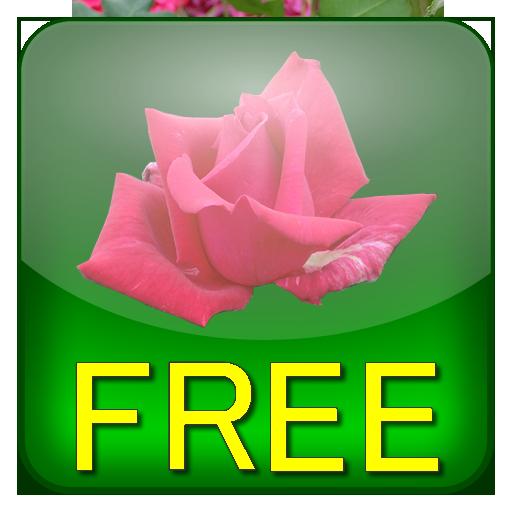 薔薇省電力ライブ壁紙(スクロール)無料版 個人化 App LOGO-硬是要APP