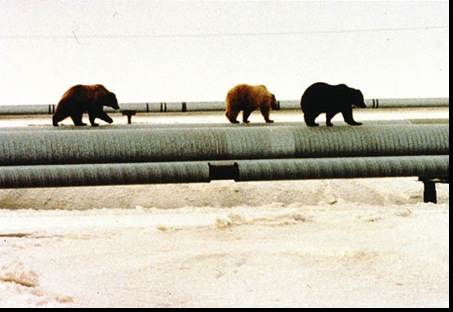 11-Bears on pipeline
