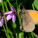 Small Heath, Níspola
