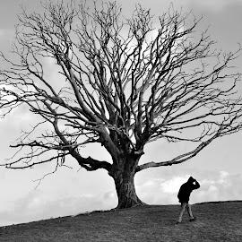 Dead Tree by Ian Harvey-Brown - Landscapes Prairies, Meadows & Fields ( black and white, b&w, landscape )