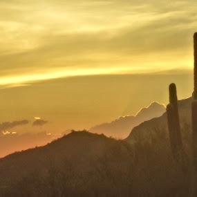 Desert's  Sunset by Jo Gonzalez - Landscapes Deserts ( landscape, sun setting, artwork )