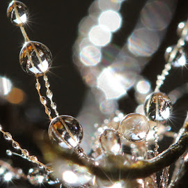 energy 1 by Lala Fuad - Nature Up Close Natural Waterdrops