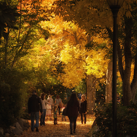 Celebration by Lori Quillen - City,  Street & Park  City Parks ( oregon, park, fall, ashland, fall color )