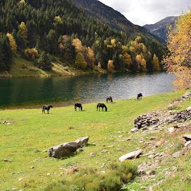 Paisatge by Josep Vallès - Landscapes Mountains & Hills ( natura, tardor, llac, cavalls, catalunya )