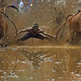 Supratman by Alhas Kasidatur Ridhwan - Sports & Fitness Rodeo/Bull Riding