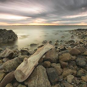 wood and rocks by Jozef Svintek - Landscapes Sunsets & Sunrises ( clouds, sky, wood, sea, rocks )