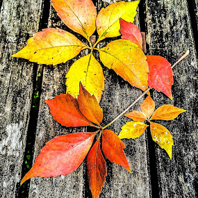 by Mauri Walton - Nature Up Close Leaves & Grasses ( fall leaves on ground, fall leaves )