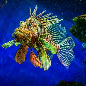Underwater II by MIhail Syarov - Animals Sea Creatures ( aquatic, underwater, fish, sea, ocean )