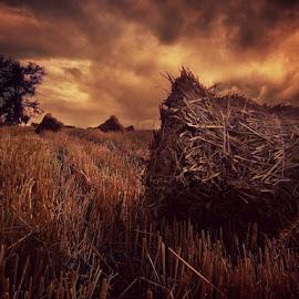 by Misa Kostadinovic - Landscapes Prairies, Meadows & Fields